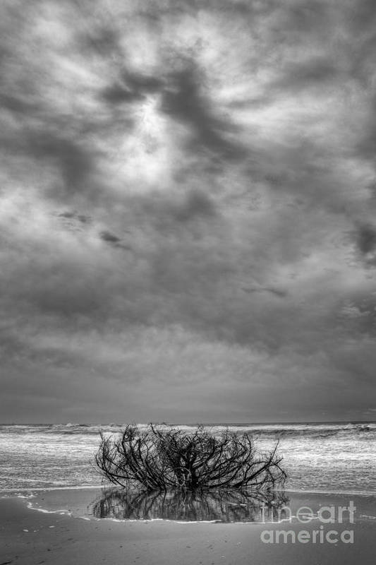 Driftwood Art Print featuring the photograph Outer Banks - Driftwood Bush On Beach In Surf IIi by Dan Carmichael