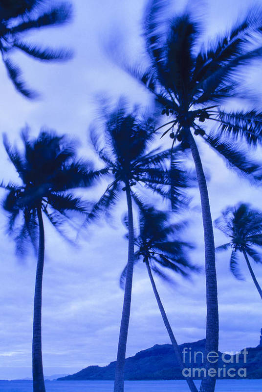 Blue Art Print featuring the photograph Palms In Storm Wind-bora Bora Tahiti by Frans Lanting MINT Images
