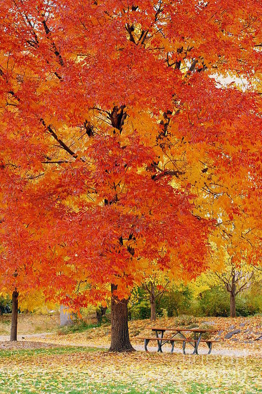Park Art Print featuring the photograph Park In Fall by Yoshiko Wootten