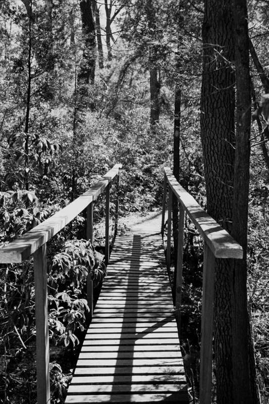 Black & White Art Print featuring the photograph Path To by Joseph Perno