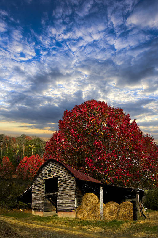 Appalachia Art Print featuring the photograph Pear Trees On The Farm by Debra and Dave Vanderlaan