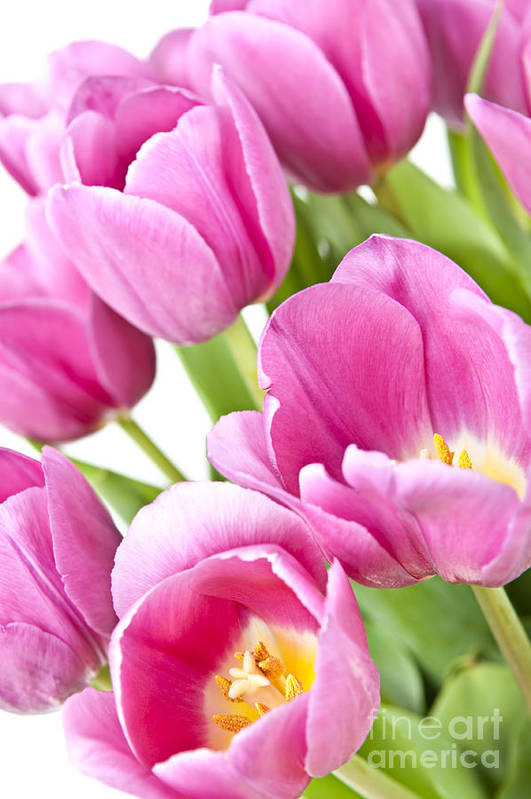 Tulips Art Print featuring the photograph Pink Tulips by Elena Elisseeva
