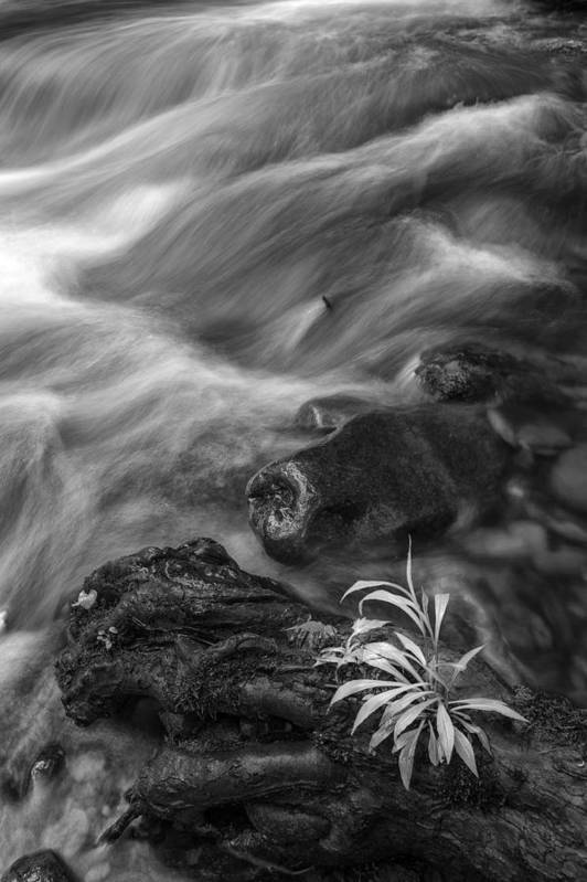 Vertical Print featuring the photograph Little Plant by Jon Glaser