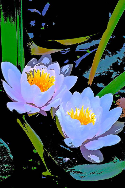 Floral Art Print featuring the photograph Pond Lily 17 by Pamela Cooper