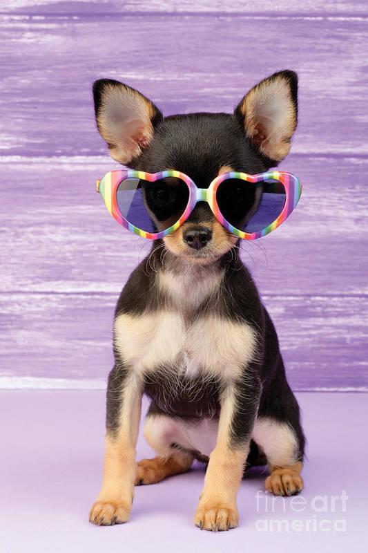 Sunglasses Art Print featuring the digital art Rainbow Sunglasses by Greg Cuddiford
