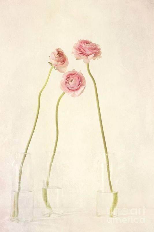 Still Life Art Print featuring the photograph Renoncules by Priska Wettstein