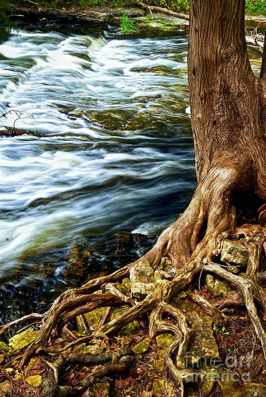 Trunk Art Print featuring the photograph River Through Woods by Elena Elisseeva