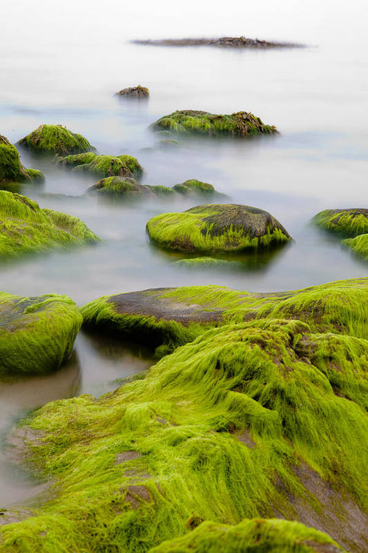 Abstract Art Print featuring the photograph Rocks Or Boulders Covered With Green Seaweed Bading In Misty Sea by Dirk Ercken
