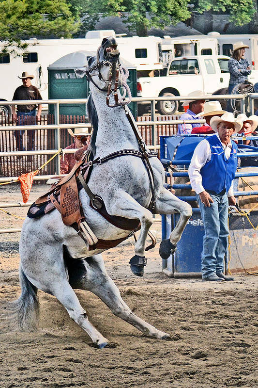 Roping Art Print featuring the photograph Rodeo Horse Cheers by Gary Keesler