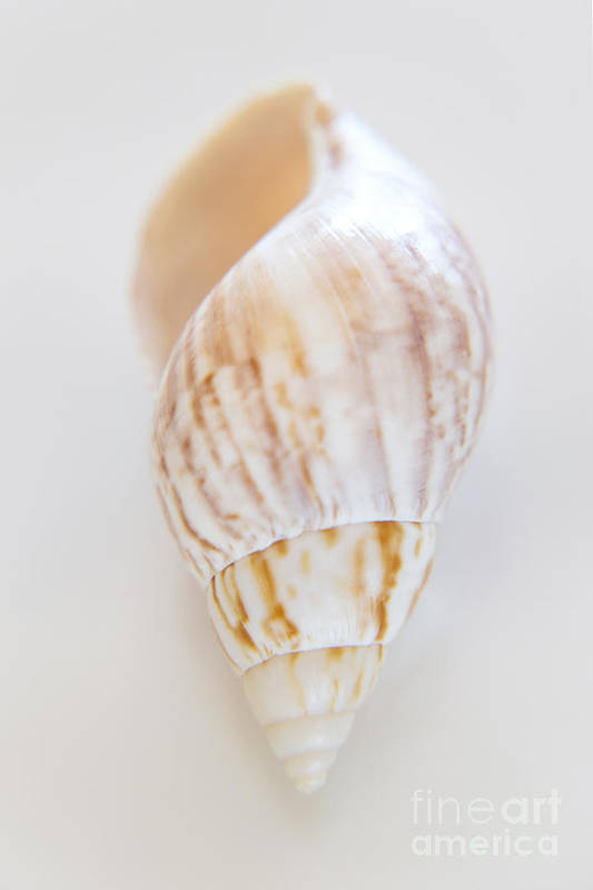Sea Art Print featuring the photograph Rusty Dove Shell by Julia Hiebaum
