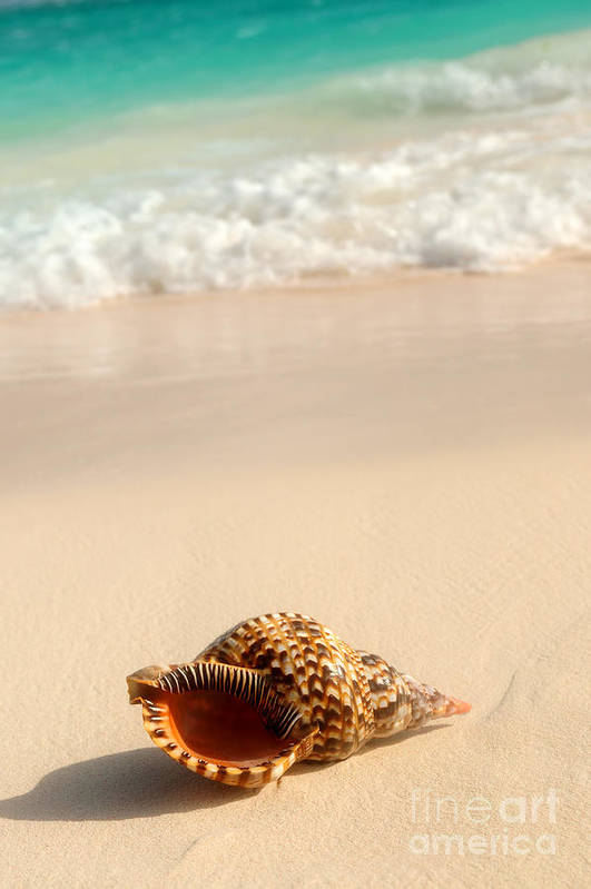 Seashell Art Print featuring the photograph Seashell And Ocean Wave by Elena Elisseeva