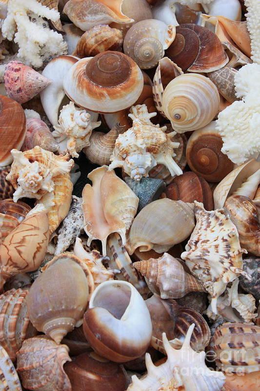 Shell Art Print featuring the photograph Seashells - Vertical by Carol Groenen