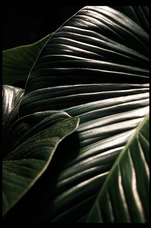 Leaf Art Print featuring the photograph Shine by Alfredo Martinez