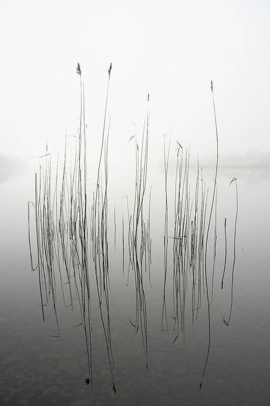 Zen Art Print featuring the photograph Silence by David Ahern