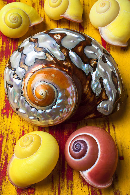 Six Art Print featuring the photograph Six Snails Shells by Garry Gay