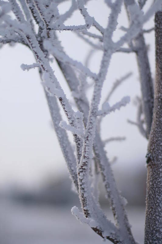 Snow Art Print featuring the photograph Snow Branches by Krista Sidwell