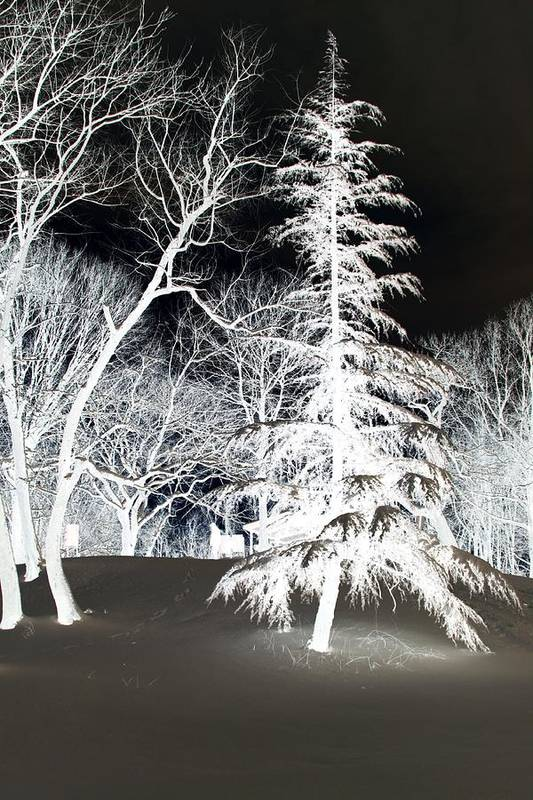 Tree Art Print featuring the photograph Snow Day Inverted by Carolyn Stagger Cokley