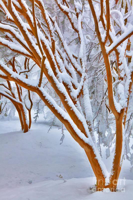 Greensboro Art Print featuring the painting Snow Wonderful Snow - Greensboro North Carolina by Dan Carmichael