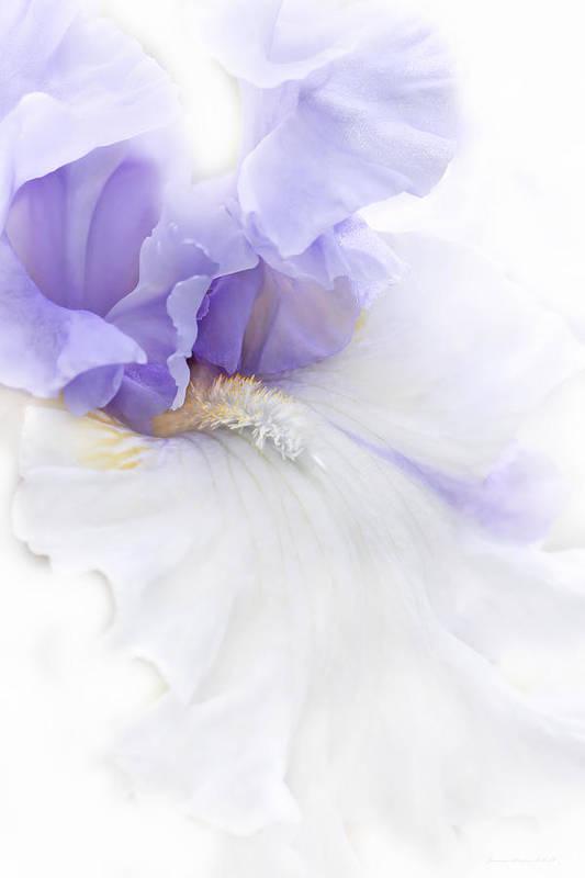 Iris Art Print featuring the photograph Softness Of A Lavender Iris Flower by Jennie Marie Schell