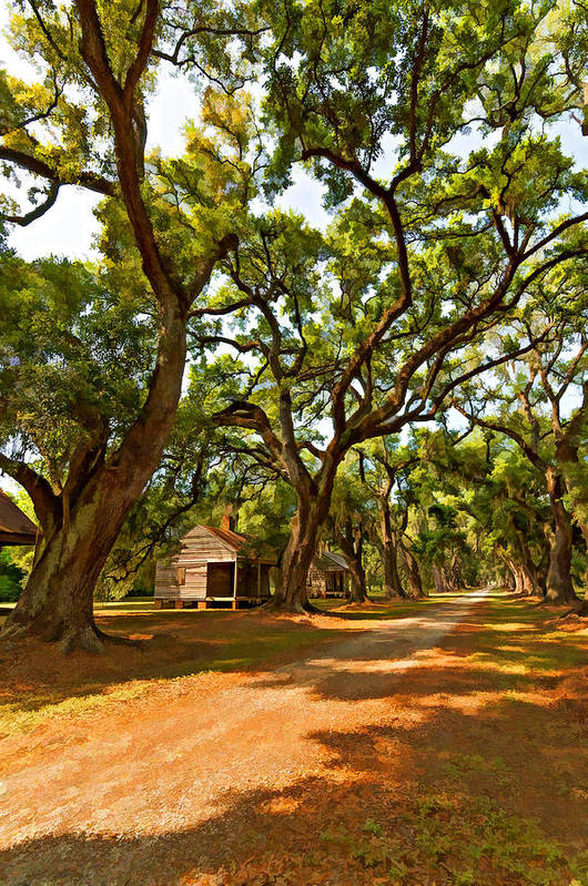 Evergreen Plantation Art Print featuring the photograph Southern Lane Paint Filter by Steve Harrington