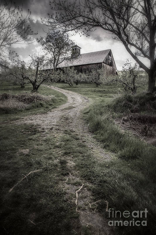 Apple Print featuring the photograph Spooky Apple Orchard by Edward Fielding