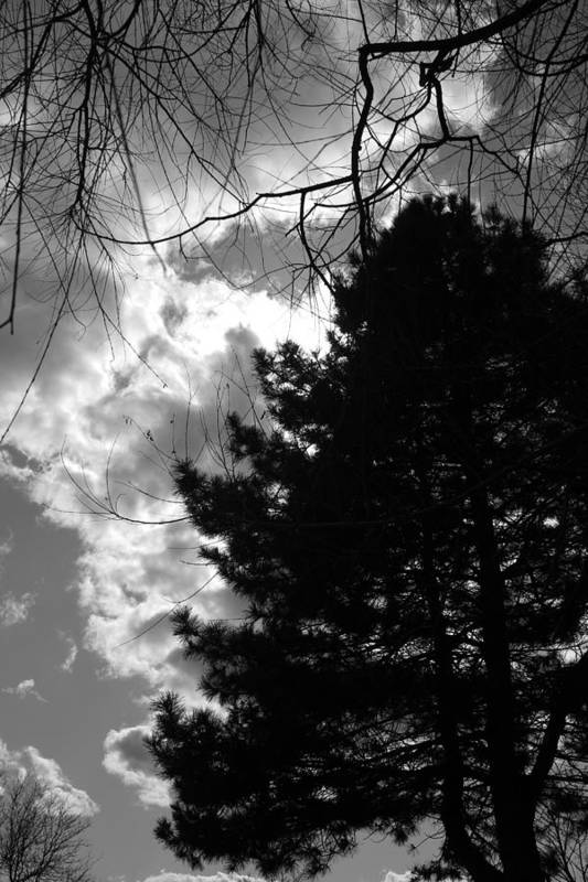 Pine Art Print featuring the photograph Spring Sky And Pine 1 Bw by Mary Bedy