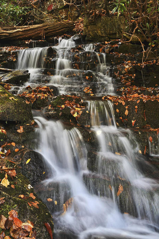 Fall Color Art Print featuring the photograph Stream And Leaves by Frank Burhenn