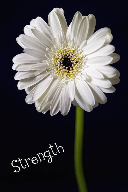 Kim Andelkovic Photography Art Print featuring the photograph Strength by Kim Andelkovic