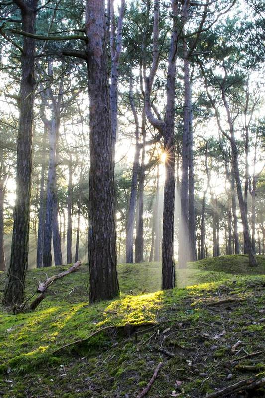 Trees Art Print featuring the photograph Sunlit Trees by Spikey Mouse Photography