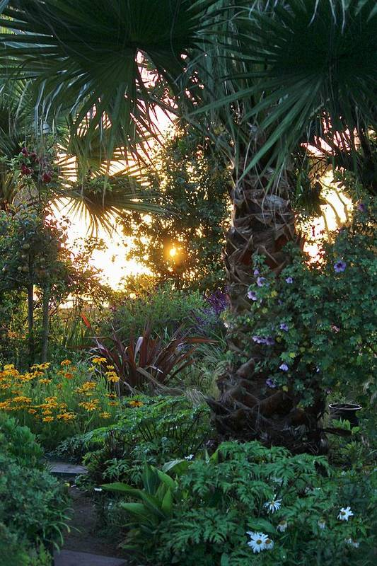 The Coast Art Print featuring the photograph Sunset In The Garden by Douglas Miller