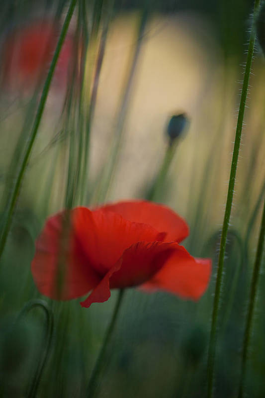 Flower Art Print featuring the photograph Surrealistic Red by Mike Reid