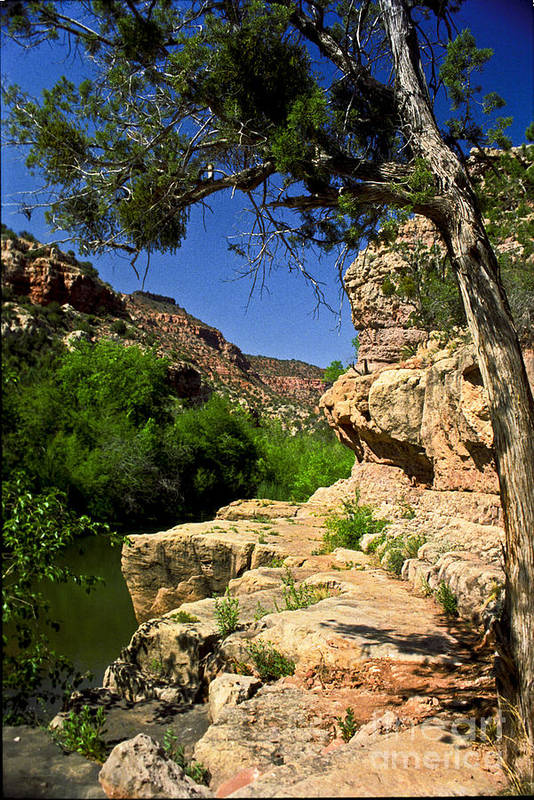 Arizona Art Print featuring the photograph Sycamore Canyon by Kathy McClure