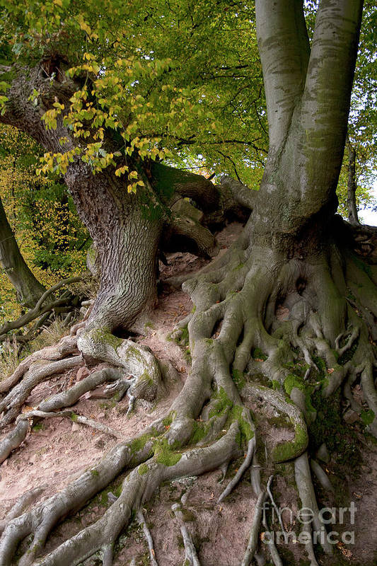 Nature Art Print featuring the photograph Taking Root by Heiko Koehrer-Wagner