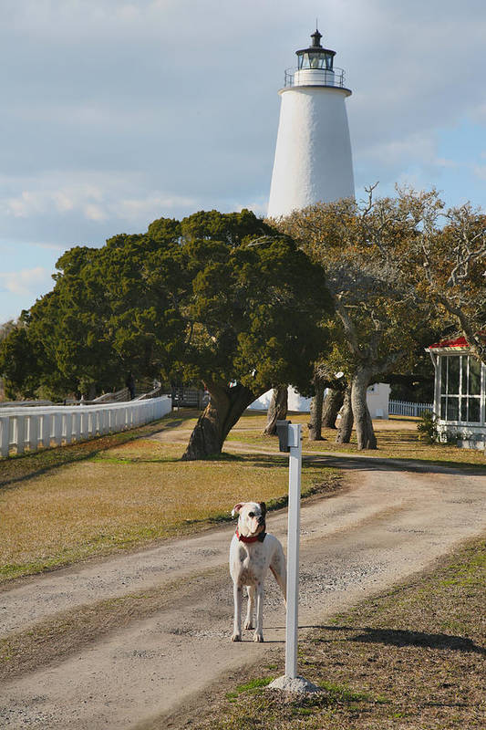 Dog Print featuring the photograph The Lighthouse Guardian by Steven Ainsworth