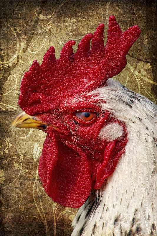 Rooster Art Print featuring the photograph The Rooster by Angela Doelling AD DESIGN Photo and PhotoArt