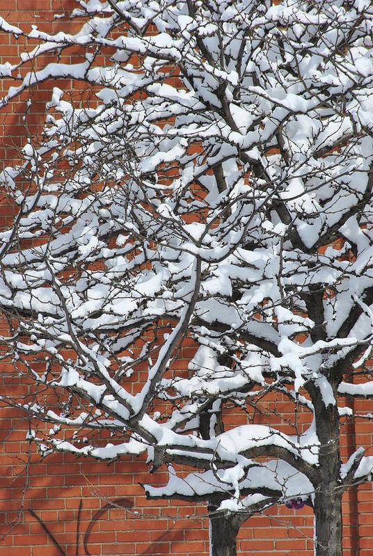 Snow Print featuring the photograph The Snow And The Wall by Frederico Borges
