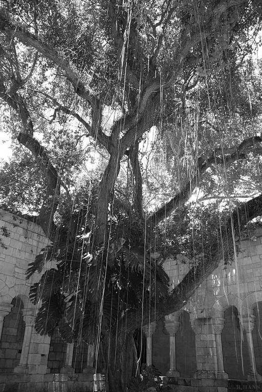 Black And White Art Print featuring the photograph The Tree Vines by Rob Hans