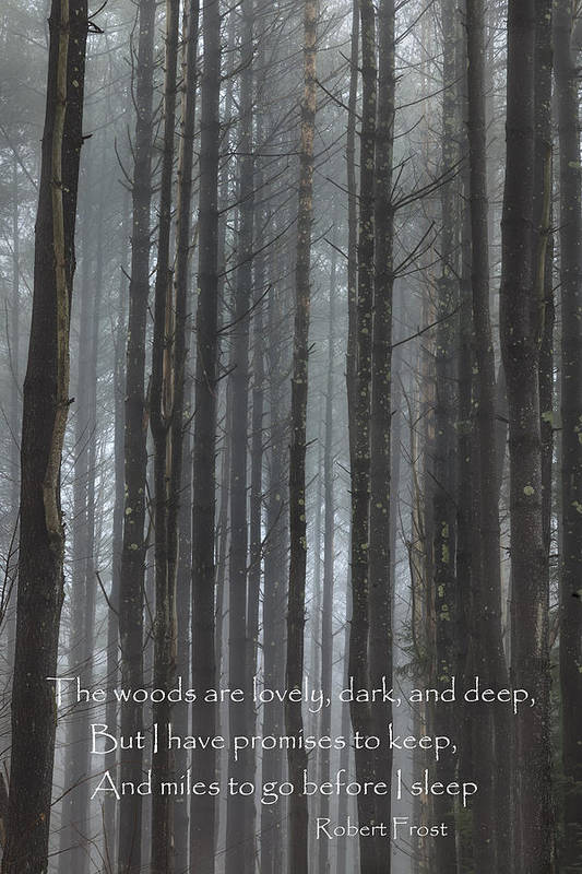 The Woods Art Print featuring the photograph The Woods by Bill Wakeley