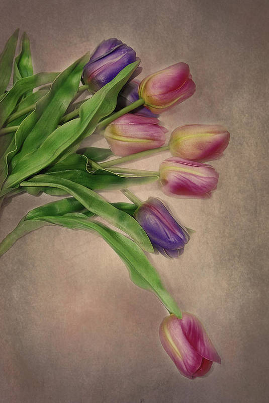 Tulips. Flowers. Petals. Green Stems. Pink Flowers Art Print featuring the photograph Tip Toe Thru The Tulips by Mary Timman