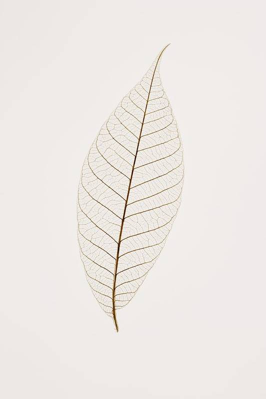 Copy-space Print featuring the photograph Transparent Leaf by Kelly Redinger