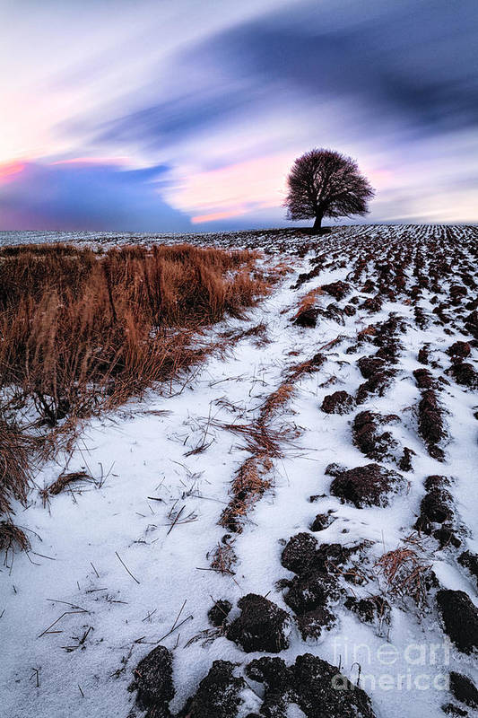 Snow Print featuring the photograph Tree In A Field by John Farnan