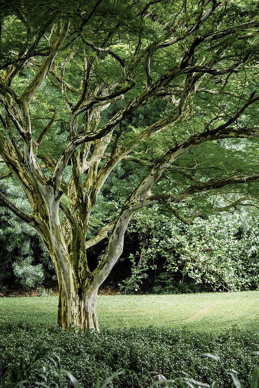 Tree Art Print featuring the photograph Tree Of Life by Debbie Karnes