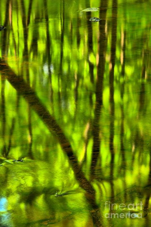 Tree Reflections Print featuring the photograph Tree Reflections by Adam Jewell