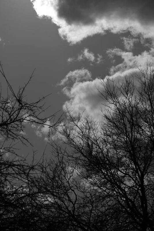 Spring Art Print featuring the photograph Trees And Clouds 3 Bw by Mary Bedy