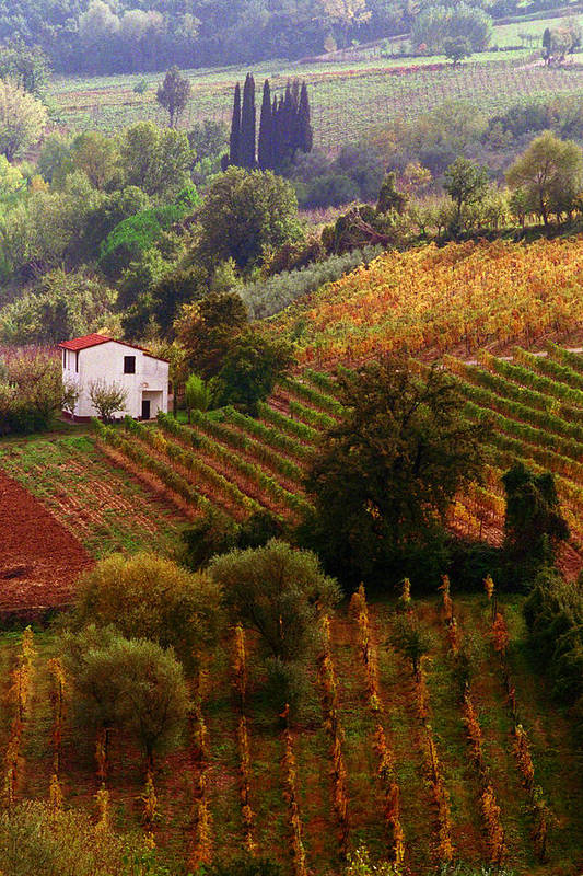 Montepulciano Art Print featuring the photograph Tuscan Autumn by John Galbo