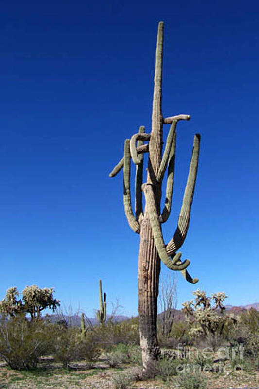 Sahuaro Art Print featuring the photograph Twisted Sentinal by Kathy McClure