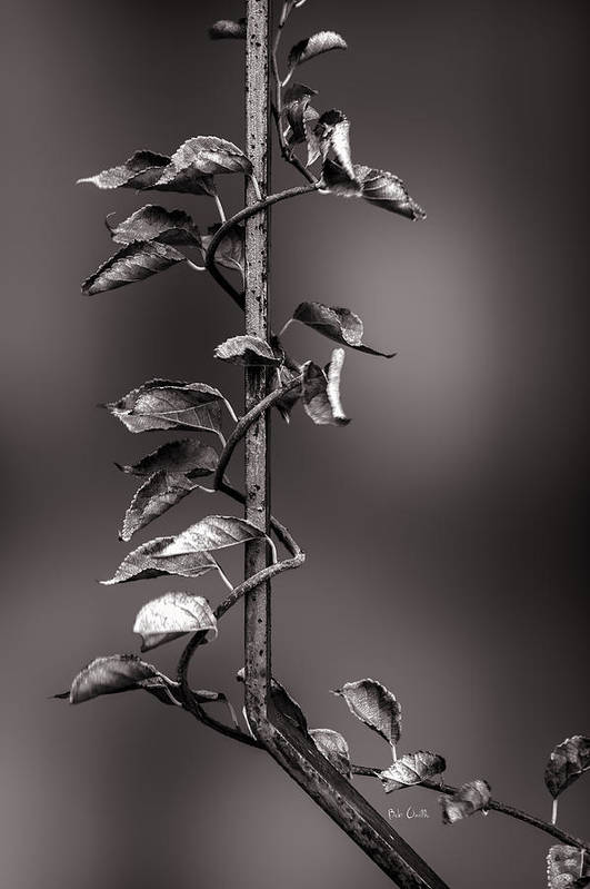 Vine Art Print featuring the photograph Vine On Iron by Bob Orsillo