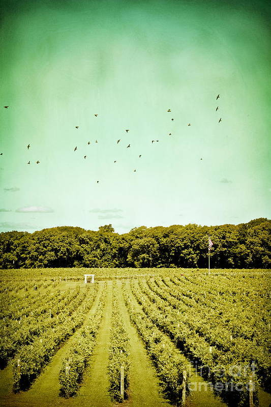 Laurita Winery Art Print featuring the photograph Vineyard by Colleen Kammerer