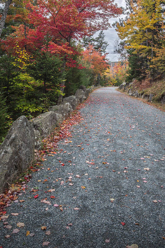 Maine Art Print featuring the photograph Walk Along by Jon Glaser