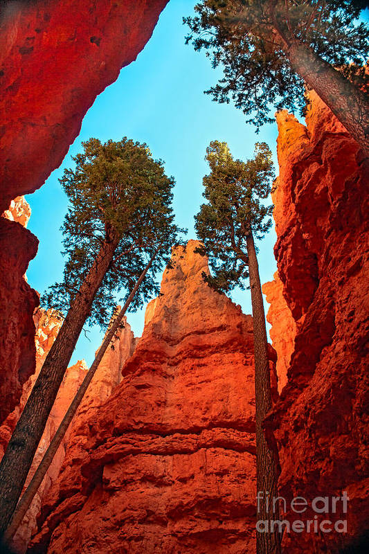 Trees Art Print featuring the photograph Wall Street by Robert Bales